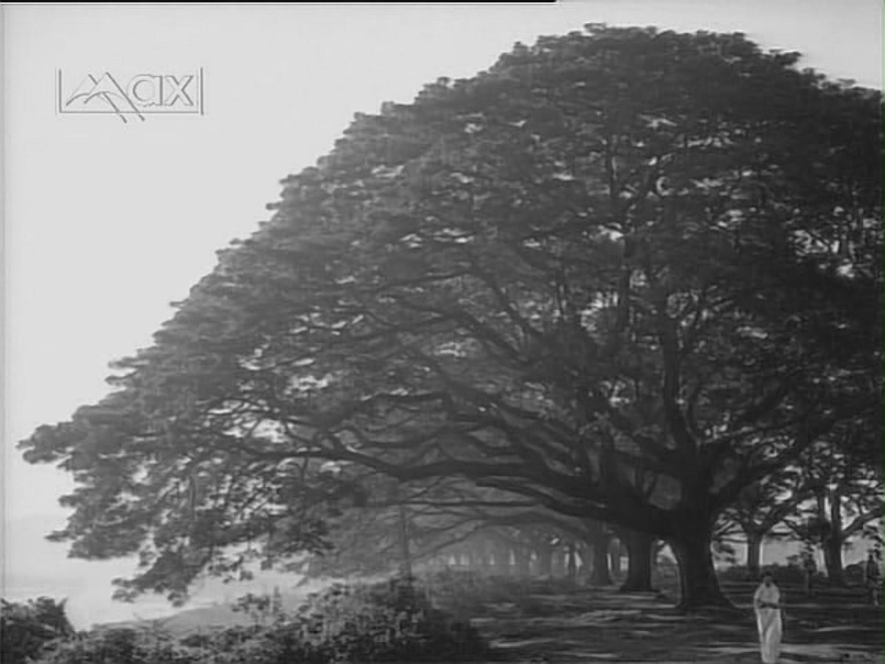 Supriya Choudhury in wide shot with tree Ritwik Ghatak's The Cloud-Capped Star