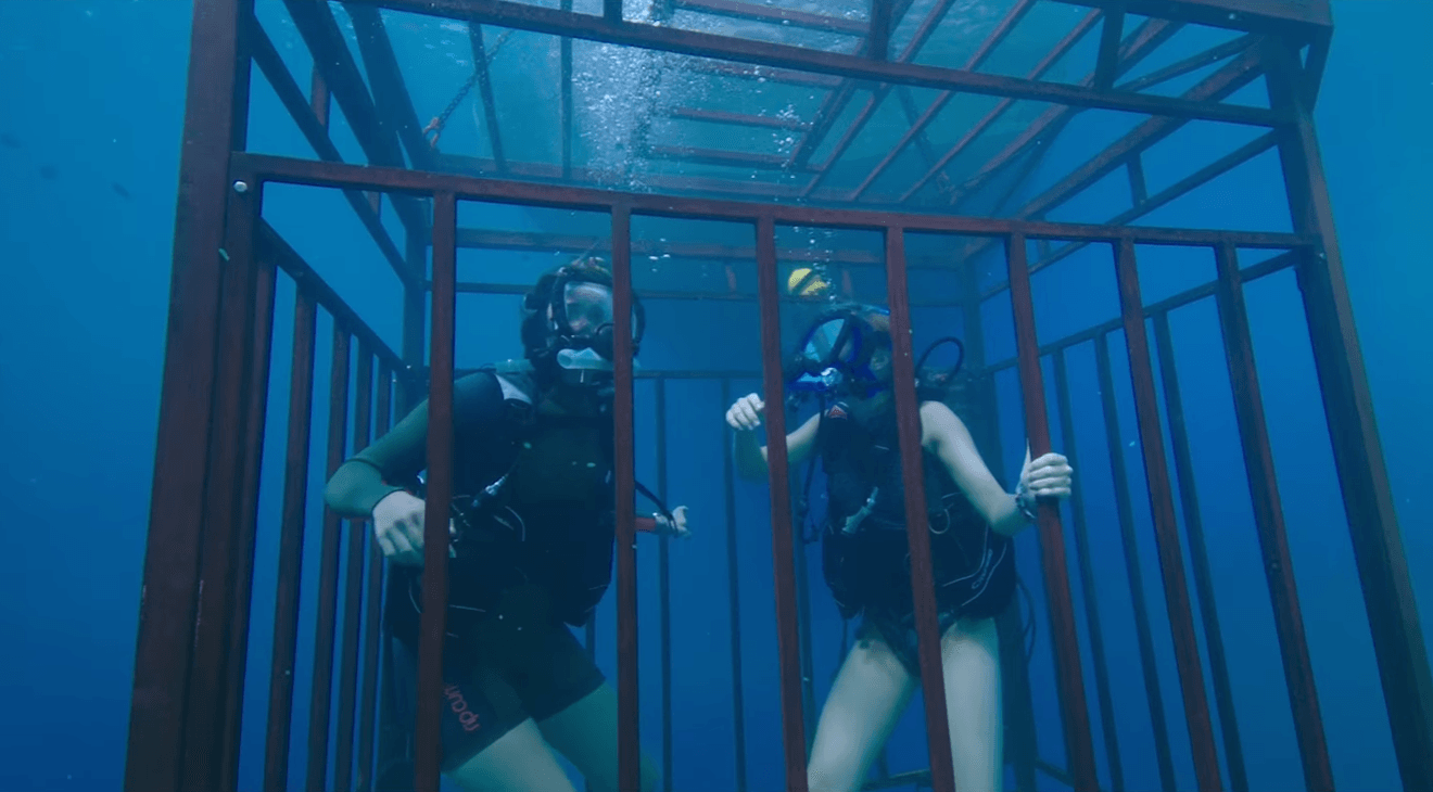 47 Meters Down Halloween 2018